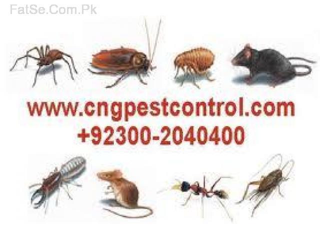 CnG Pest Control Karachi is the best pest services company Karachi