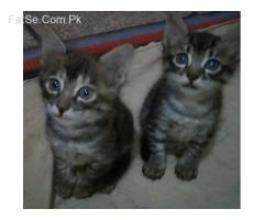 kittens playfully healthy and potty train